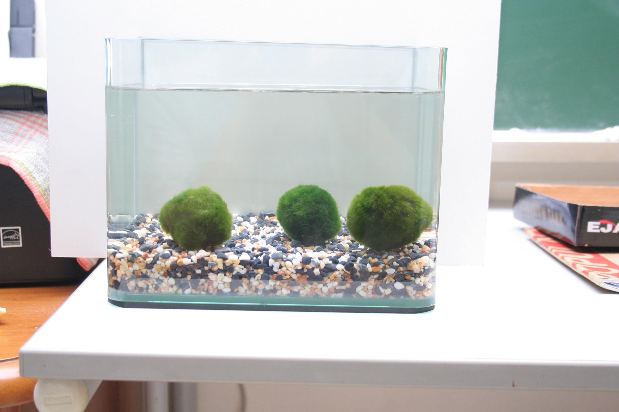 Aquarium fish tank singapore - Led