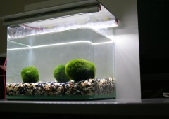 My Exploration into Marimo